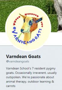 Varndean Goats Twitter